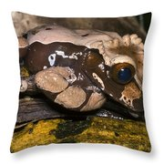 Crowned Tree Frog Throw Pillow