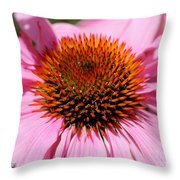 Echinacea Purpurea Or Purple Coneflower Throw Pillow