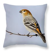 Female Pine Grosbeak Throw Pillow