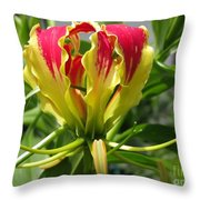 Gloriosa Named Rothschildiana Throw Pillow