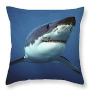Great White Shark Carcharodon Throw Pillow