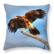 Harris Hawk Throw Pillow
