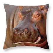 Hippopotamus Hippopotamus Amphibius Throw Pillow by Gerry Ellis