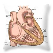Illustration Of Heart Anatomy Throw Pillow