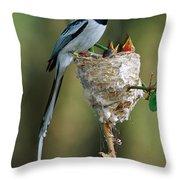 Madagascar Paradise Flycatcher Throw Pillow