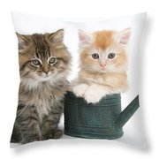 Maine Coon Kittens Throw Pillow