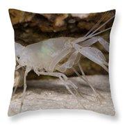 Mclanes Cave Crayfish Throw Pillow