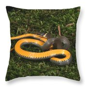 Northern Ringneck Snake Throw Pillow