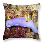 Nudibranch Feeding On Algae, Papua New Throw Pillow