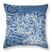 4 Phase Contrast- Candida Albicans Throw Pillow