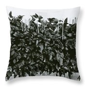 Photoperiodicity In Soybean Plants Throw Pillow