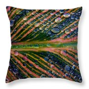 Raindrops On Lily Leaf Throw Pillow