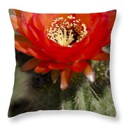 Red Cactus Flower Throw Pillow