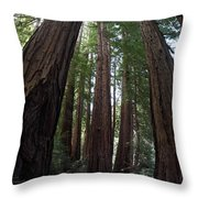 Redwoods Sequoia Sempervirens Throw Pillow