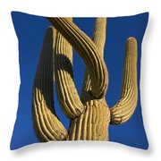 Saguaro Carnegiea Gigantea Cactus Throw Pillow