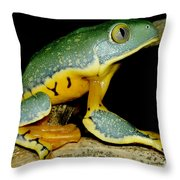 Splendid Leaf Frog Throw Pillow