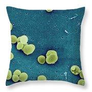 Staphylococcus Aureus Bacteria Throw Pillow