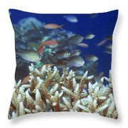 Underwater Landscape  Throw Pillow