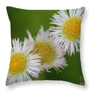 Wildflower Named Robin's Plantain Throw Pillow