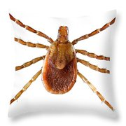 Yellow Dog Tick Throw Pillow