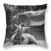 Zebras In Black And White Throw Pillow