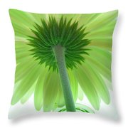4782c Throw Pillow