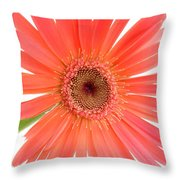 4989 Throw Pillow