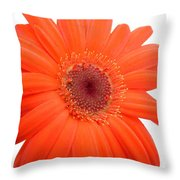 4992c Throw Pillow