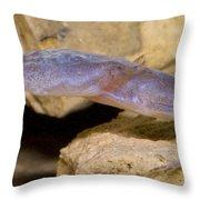 Austin Blind Salamander Throw Pillow