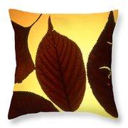 5 Autumn Leaves Throw Pillow