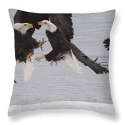 Bald Eagle Haliaeetus Leucocephalus Throw Pillow