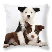 Border Collie Puppies Throw Pillow