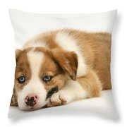 Border Collie Puppy Throw Pillow by Jane Burton