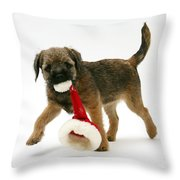 Border Terrier Puppy Throw Pillow