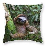 Brown-throated Three-toed Sloth Throw Pillow by Suzi Eszterhas