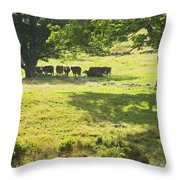 Cows Grazing On Grass In Farm Field Summer Maine Throw Pillow