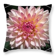 Dahlia Named Valley Porcupine Throw Pillow