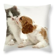 Dog And Cat Throw Pillow by Jane Burton