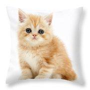 Ginger Kitten Throw Pillow
