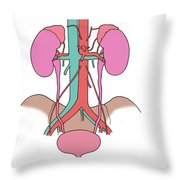 Illustration Of Urinary System Throw Pillow