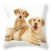 Labradoodle And Labrador Retriever Throw Pillow by Jane Burton