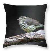 Northern Waterthrush Throw Pillow