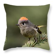 Rubycrowned Kinglet Throw Pillow