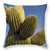Saguaro Carnegiea Gigantea Cactus Throw Pillow