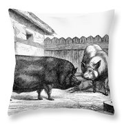Swine, 19th Century Throw Pillow