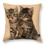 Tabby Kittens Throw Pillow