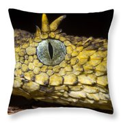 Usambara Eyelash Bush Viper Throw Pillow