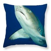 Whitetip Reef Shark, Kimbe Bay, Papua Throw Pillow