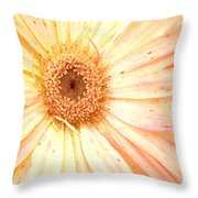 5517c2 Throw Pillow