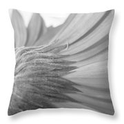 5572-2-002 Throw Pillow
